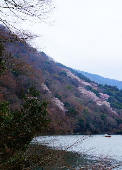 嵐山・法輪寺境内の桜05