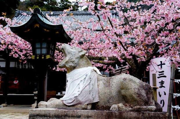 嵐山・法輪寺境内の桜07