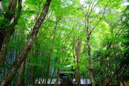 京都洛西にある地蔵院の参道