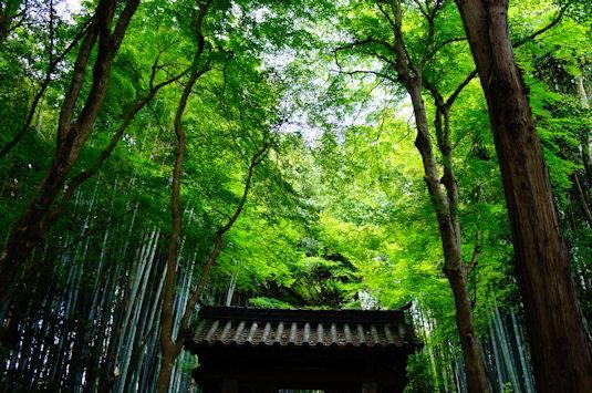 京都洛西にある地蔵院の参道2