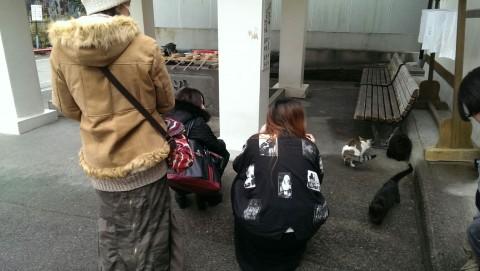 猫を見るドクターモンロー名古屋本店メンバー