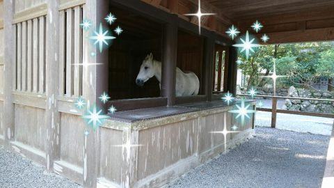 伊勢神宮の白馬